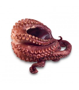 Pulpo entero (t-2)